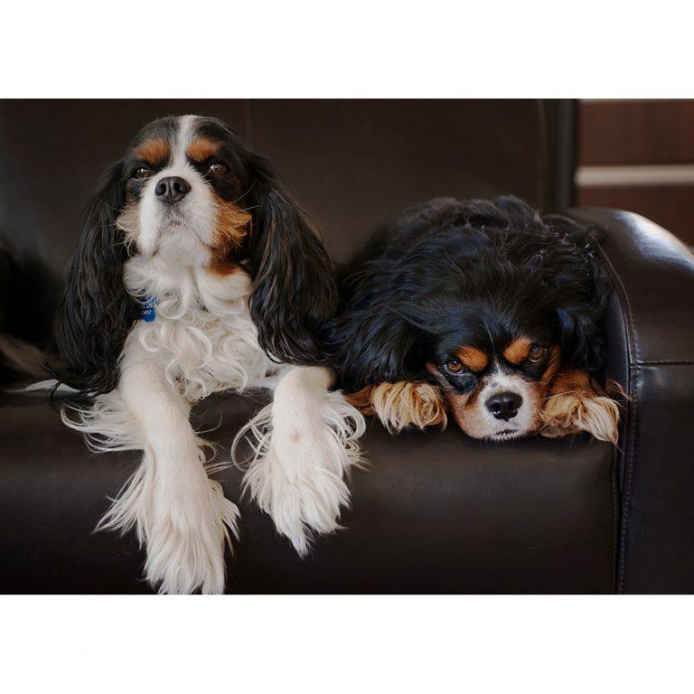 Beau and Louie